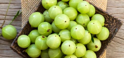 Indian Gooseberry-rich in Vitamin C