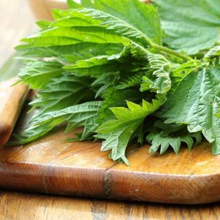nettle leaf benefits-PCOS Treatment